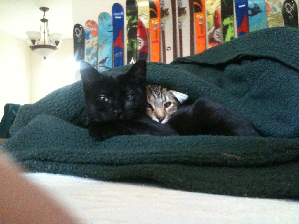 Olive and Sprout, 3 months old (2010)